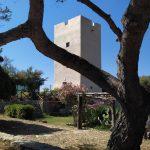 La Torre oltre il pino
